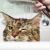 Comment s'assurer que votre chat utilise les toilettes quotidiennement