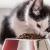 Quelle quantité de nourriture pour chat devriez-vous donner à votre chat?